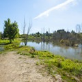 Large wetland that has permanently flooded a central portion of Greenway Park.- Greenway Park + Fanno Creek Trail
