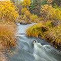 A scene of gold along Burney Creek.- Headwaters Trail + PCT bridge