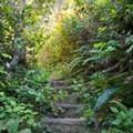 Lush vegetation growing along the trail.- Ceremonial Rock