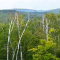 An example of the forest that can be found along the trail.- Bean Lake + Bear Lake via the Superior Hiking Trail