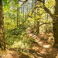 Lush forest surrounding the trail.- Thetis Lake