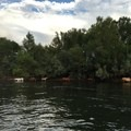 Horses can be regularly seen while kayaking the Salt River.- Lower Salt River: Water Users Camp Circle to Granite Reef