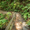 The first part of the trail is classic westcoast rainforest.- Witty's Lagoon