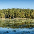 Looking north across the lagoon at the reflection of the forest on the far side.- Witty's Lagoon