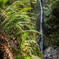 The canyon area below Niagara Falls is a lush rainforest.- Niagara Falls + Goldstream Trestle Bridge