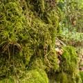 Mossy forest on the trail to Niagara Falls.- Niagara Falls + Goldstream Trestle Bridge