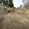 The trail is popular with horseback riders and mountain bikers as well.- Galena Creek Trail