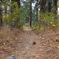 Galena Creek Trail.- Galena Creek Trail