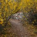 Colorful arches.- Galena Creek Trail