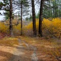A colorful explosion along the trail.- Galena Creek Trail