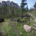 The trail ascends through the forest until it approaches the first granite cliffs.- Black Elk Peak via Willow Creek