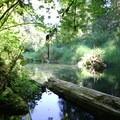 Delta Creek, which meanders behind campsites 26 through 38.- Delta Campground