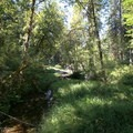 An arm of the McKenzie River.- Delta Campground