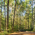Forested campsites.- Spring Salmon Place Campground