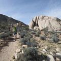Starting off on the Ryan Mountain Trail.- Ryan Mountain Hike