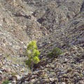 Vegitation is sparse in this arid environment.- Goat Canyon Trestle Trail