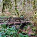 Footbridge over Soda Creek in Cascadia State Park.- Soda Creek Falls Trail