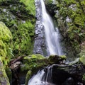 Moss covered rocks surround Soda Creek Falls.- Soda Creek Falls Trail