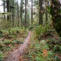 Trail leading to the Cascadia State Park campground.- Soda Creek Falls Trail