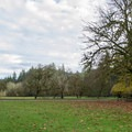 Large, open field in the day use area in Cascadia State Park.- Cascadia State Park