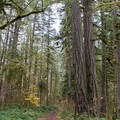 Hiking trail along the river in Cascadia State Park.- Cascadia State Park
