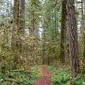 Hiking trail along the South Santiam River.- Cascadia State Park