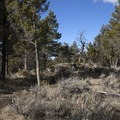 Pines and sagebrush line the first mile of trail.- Yellowstone River Picnic Trail