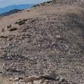 The last stretch toward the summit of San Gorgonio.- San Gorgonio Mountain via Vivian Creek