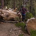There are some sections with a few logs on the trail, however.- San Gorgonio Mountain via Vivian Creek