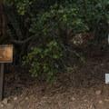 Entering the San Gorgonio Wilderness.- San Gorgonio Mountain via Vivian Creek