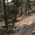 The trail is mostly well maintained.- San Gorgonio Mountain via Vivian Creek