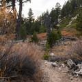 Vivian Creek.- San Gorgonio Mountain via Vivian Creek
