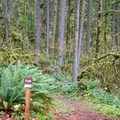 Trailhead for Soda Creek Falls.- Cascadia State Park Campground
