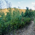 Short brush keeps the trail quiet.- Morgan Falls Overlook Park