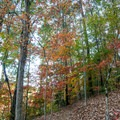 Fall colors on the trail.- Morgan Falls Overlook Park
