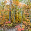Amazing colors in late October.- Gold Branch Trail