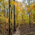 Miles of quiet forest just minutes from the city.- Gold Branch Trail