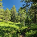 A beautiful break in the trees.- Mount Herman