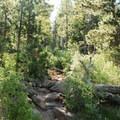 The Mount Herman Trail.- Mount Herman