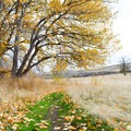 Fall colors at Snow Mountain Ranch.- Cowiche Mountain Trail