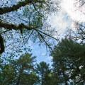 Tall trees surround Alderwood State Wayside.- Alderwood State Wayside