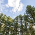 Alderwood State Wayside near the Oregon Coast Range.- Alderwood State Wayside