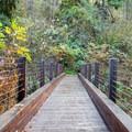Footbridge across the Long Tom River.- Alderwood State Wayside