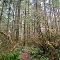Short hiking trail from Alderwood State Wayside.- Alderwood State Wayside