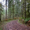 The trails lead to logging roads.- Alderwood State Wayside