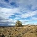 Juniper trees grow amidst sagebrush and rabbitbrush.- Tam-a-Láu Trail