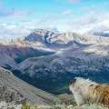 Marmots enjoying the view.- Nub Peak