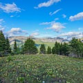 Wildflowers along the trail.- Nub Peak