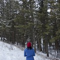Forested sections are nothing short of magical.- Beaver Ponds Loop