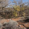 Picnic Area at Red Cliffs Campground.- Red Cliffs Campground